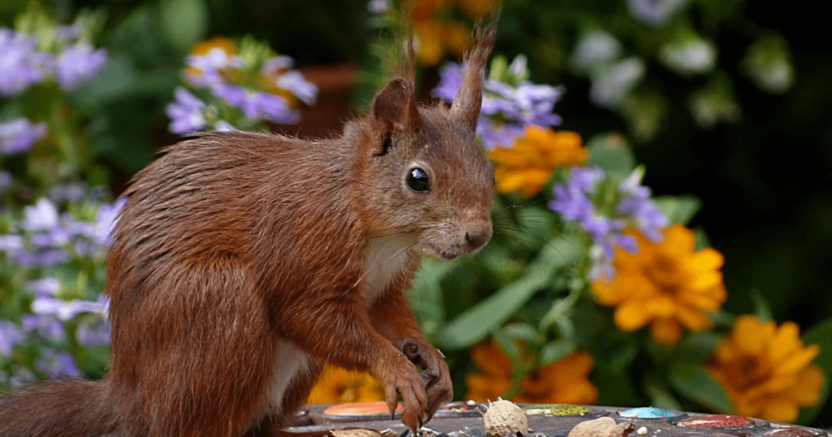 squirrel in spring image