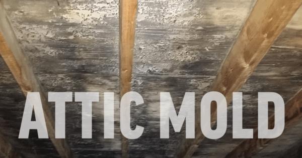 Image of Attic Mold